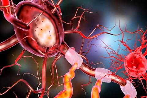 neuron-3567980_1920